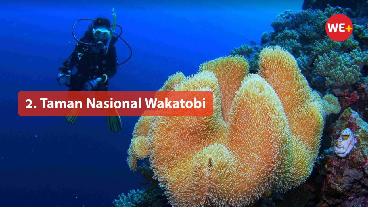 Taman Nasional Wakatobi